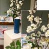 「生け花」によるボランティア