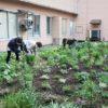 新庄病院の「グリーンサム」-中庭の花植え
